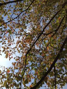 秋の賀茂川02