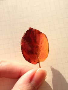 秋の賀茂川03