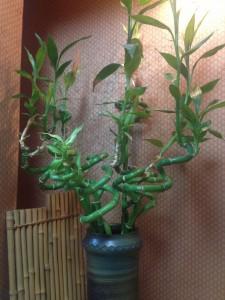 くるくる竹