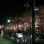 木屋町南_夜2